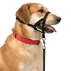 Halti Training Harness