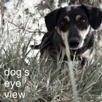 A Dogs Eye View On Obedience Training